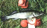 все о ловле рыбы на кружки